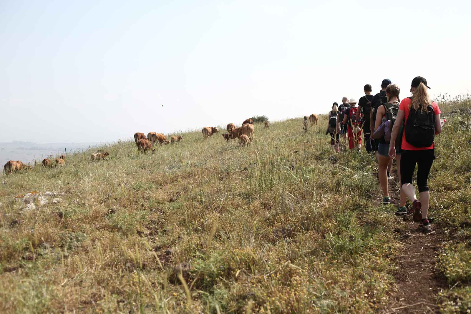 HIKING-TOURS IN ISRAEL